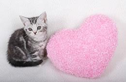 ワクチンで予防できる猫の伝染病のイメージ