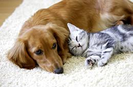 犬の避妊・去勢についてイメージ